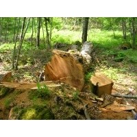 Le bois et les haies